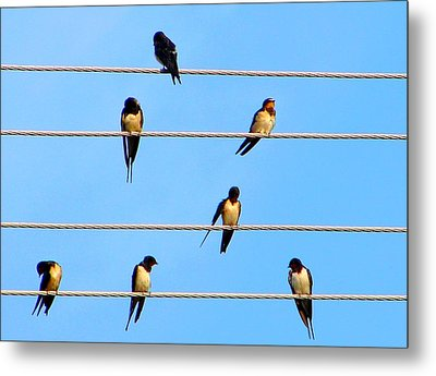 Metal Print featuring the photograph Seven Swallows by Ana Maria Edulescu