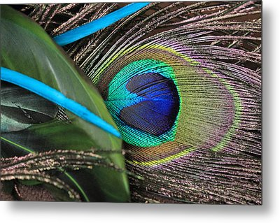 Several Feathers Metal Print by Angela Murdock