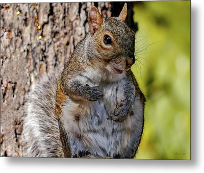Metal Print featuring the photograph Sexy Squirrel by Bob Orsillo
