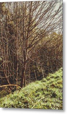 Shabby Leafless Trees Metal Print