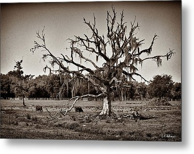 Shade Free - Sepia Metal Print by Christopher Holmes