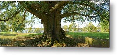 Shade Tree 2 Panoramic Metal Print by Mike McGlothlen