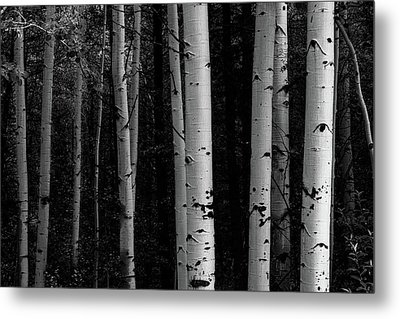 Shades Of A Forest Metal Print