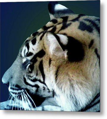 Shades Of A Tiger  Series Metal Print by Debra     Vatalaro