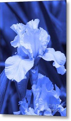 Shades Of Blue Iris  Metal Print