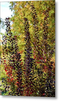 Metal Print featuring the photograph Shades Of Fall by Deborah  Crew-Johnson