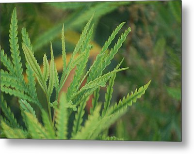 Shades Of Green Metal Print by Jean Booth