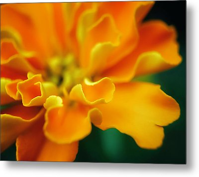 Metal Print featuring the photograph Shades Of Orange by Eduard Moldoveanu