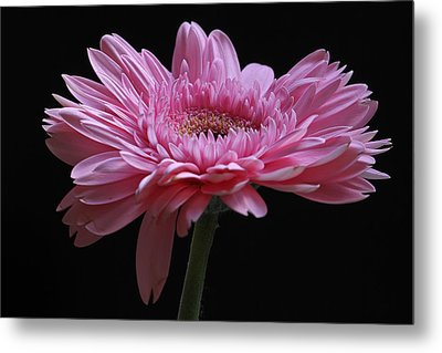 Metal Print featuring the photograph Shades Of Pink by Juergen Roth