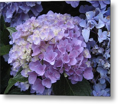 Shades Of Purple Metal Print