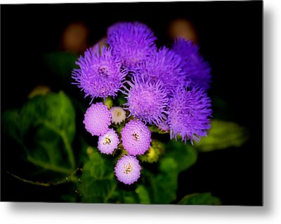 Shades Of Purple Metal Print by Karen Scovill