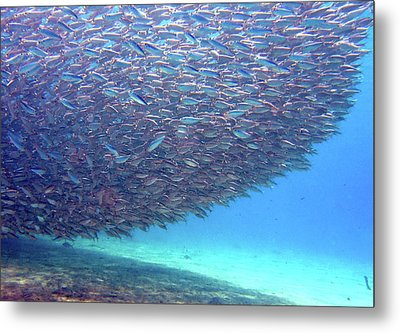 Shadow On Reef - Bait Ball Metal Print by Dr Peter M Forster