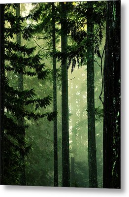 Shadows Of Light Metal Print by Connie Handscomb