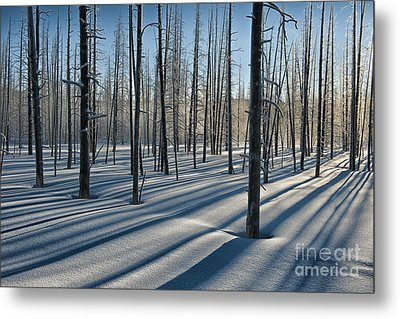 Shadows Of The Forest Metal Print by Sandra Bronstein