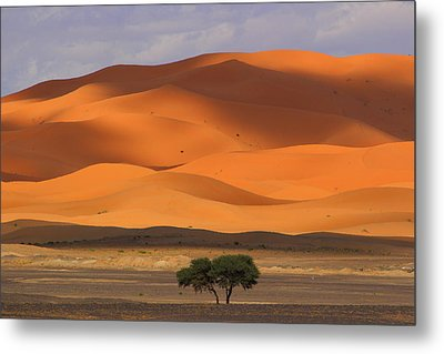 Metal Print featuring the photograph Shadows On The Dunes by Ramona Johnston