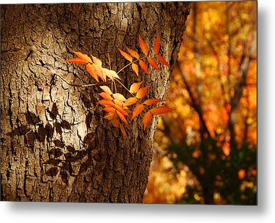 Fall Color Metal Print by Tam Ryan