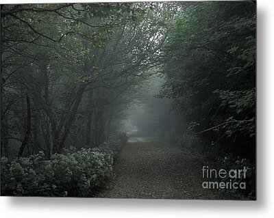 Shady Lane Metal Print by Stan and Anne Foster