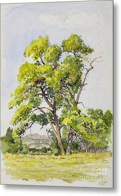 Shady Oak Tree Metal Print by James Robert MacMillan