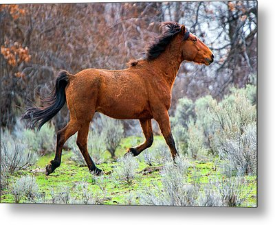 Metal Print featuring the photograph Shaggy And Proud by Mike Dawson