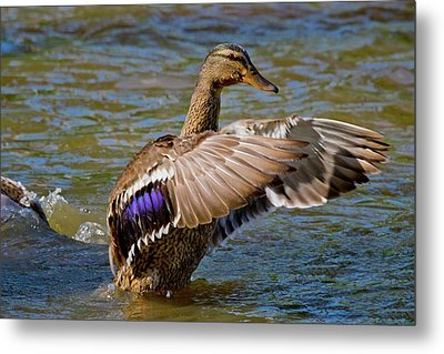 Metal Print featuring the photograph Shake It Off by Linda Unger