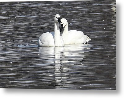 Sharing A Moment Metal Print
