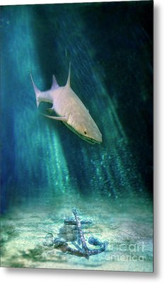 Metal Print featuring the photograph Shark And Anchor by Jill Battaglia