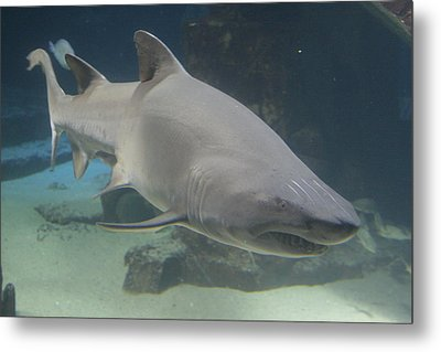 Shark Run Metal Print