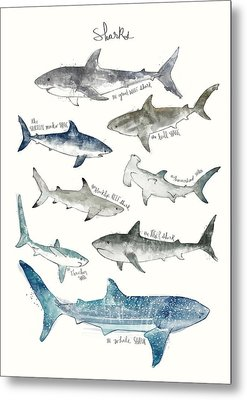 Sharks Metal Print by Amy Hamilton