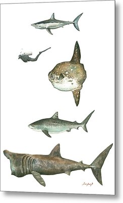 Sharks And Mola Mola Metal Print
