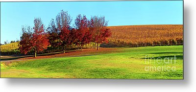 Metal Print featuring the photograph Shaw And Smith Winery by Bill Robinson