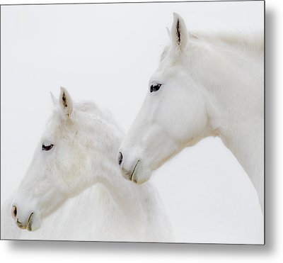 She Dreamed Of White Horses Metal Print by Ron  McGinnis