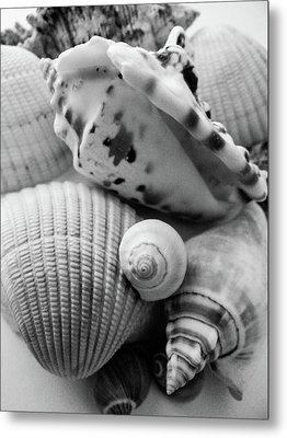 She Sells Seashells Metal Print by Julia Wilcox