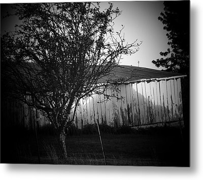 Shed  And Tree Metal Print by Michael L Kimble