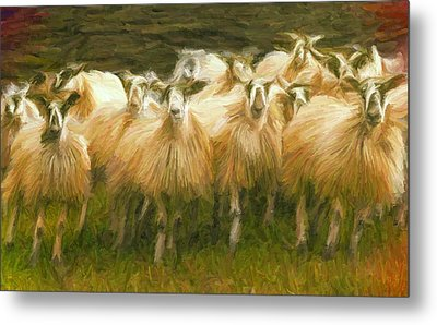 Sheep At Hadrian's Wall Metal Print