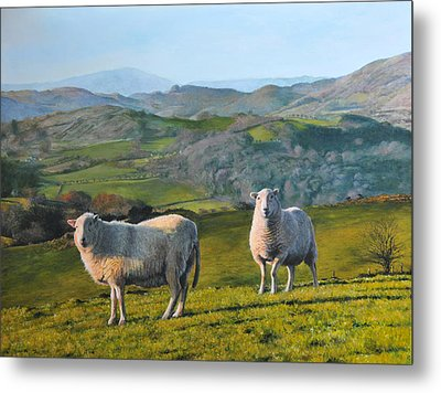 Metal Print featuring the painting Sheep At Rhug by Harry Robertson