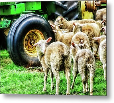 Metal Print featuring the photograph Sheep Guards by Toni Hopper
