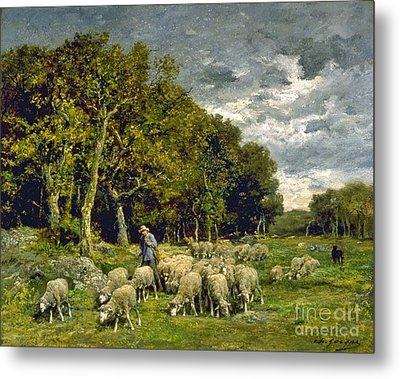 Sheep In A Pasture Metal Print by MotionAge Designs