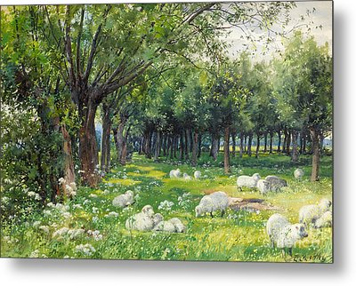 Sheep In An Orchard At Springtime Metal Print by Louis Fairfax Muckley