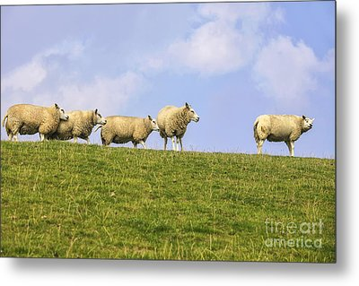 Sheep On Dyke Metal Print