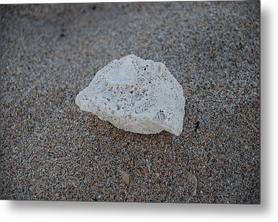 Shell And Sand Metal Print by Rob Hans
