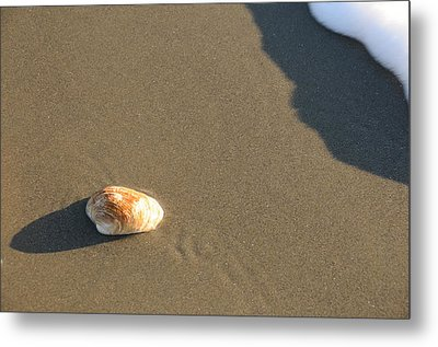 Shell And Waves Part 2 Metal Print by Alasdair Turner