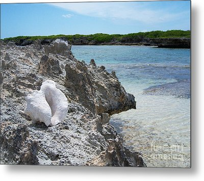 Shell On Dominican Shore Metal Print