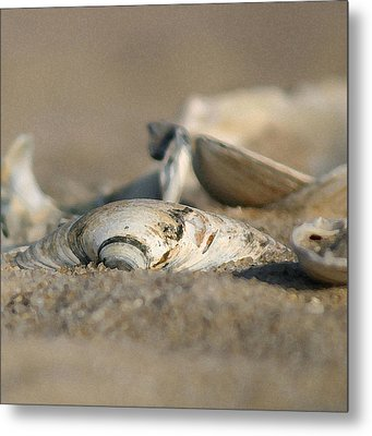 Shell Pile Metal Print by Mary Haber