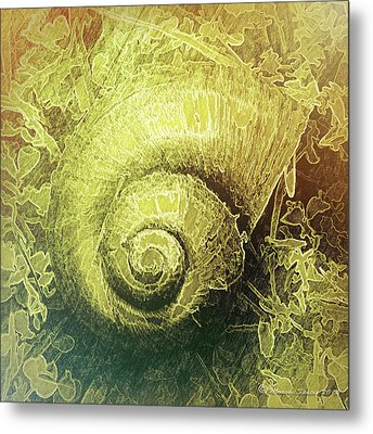 Shell Series 4 Metal Print by Marvin Spates