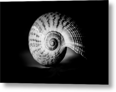 Shell Study No. 001 Metal Print