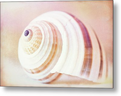 Shell Study No. 02 Metal Print