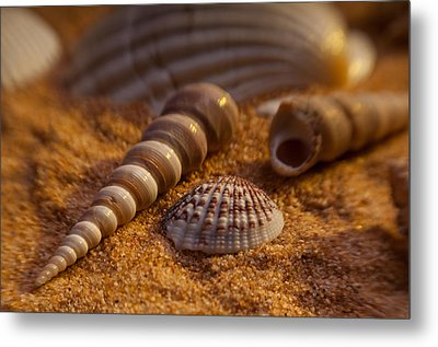 Shells Metal Print by Anthony Towers