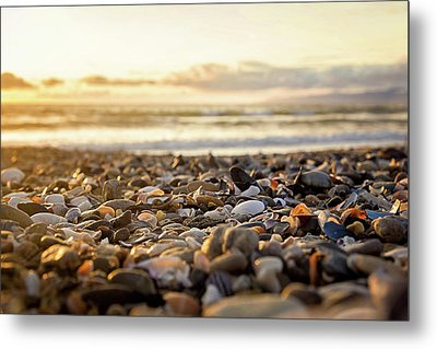Metal Print featuring the photograph Shells At Sunset by April Reppucci