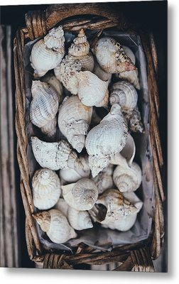 Shells Metal Print by Happy Home Artistry