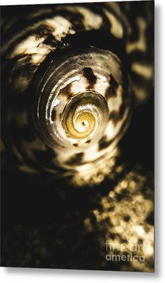 Shells In Detail Metal Print by Jorgo Photography - Wall Art Gallery